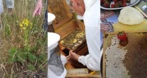 Fotos: Bo Albrechtslund og Kgs. Enhgave Lokaludvalg