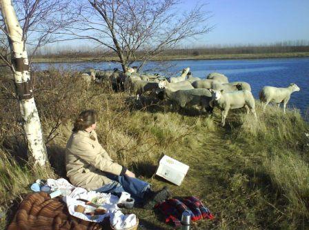 Tæppe, termokande og tålmodighed - så kommer fårene til dig!