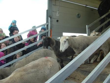 fåreudbinding 2013 sidste til web
