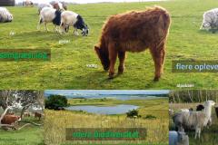 Naturplan for Sydhavnstippen 2019, side 2