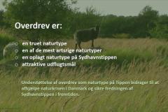 Naturplan for Sydhavnstippen 2019, side 4