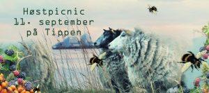 hoest_picnic